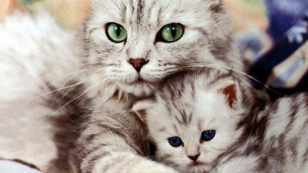 #Amicia4zampe: come nutrire in modo corretto i nostri gatti