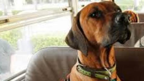 Hai un cane grande? per Sgm non può salire sull'autobus