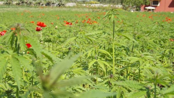 2,5 chili di veleni per ogni salentino: le alternative ai pesticidi