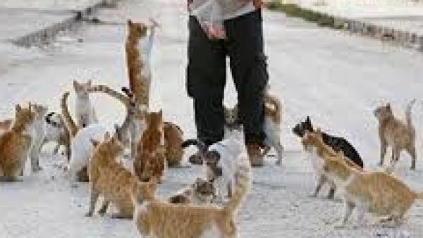"""""""Divieto di somministrazione di cibo a cani e gatti"""", le precisazioni di Guido"""